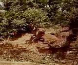 तार-बाड़ में फंसा तेंदुआ, वन विभाग ने पिंजरे में किया कैद