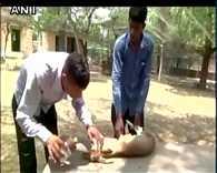 Rajasthan: Animal Rescue Centre in Jodhpur treats black