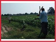 अपने खेतों से किसान हटाने लगे ब्लेडयुक्त तार