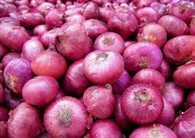 MMTC will import 10 thousand tons of onions