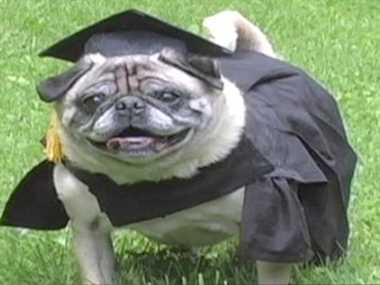 First Dog To Pursue Higher Education