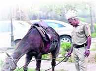 'Aamir Khan' sold in five lahks in Sonepur, Read...