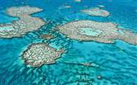 Bleaching puts sites from Attenborough's Great Barrier Reef on the brink