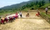 काश्तकारों ने खेतों में शुरू की धान की रोपाई