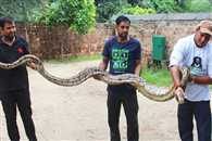 Agra-Mathura highway stopped by python