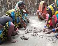 Flood affected dalits taking rat as meal in a Bihar village, DM says- no problum