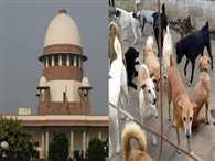 The Supreme Court concerned to stray dog bites children