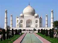 Bees attack in the Tajmahal , many tourists injured