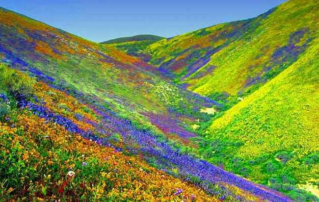'Valley of Flowers' is Beautiful as Fairyland