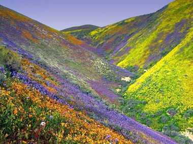 Today will stop the movement of the Valley of Flowers