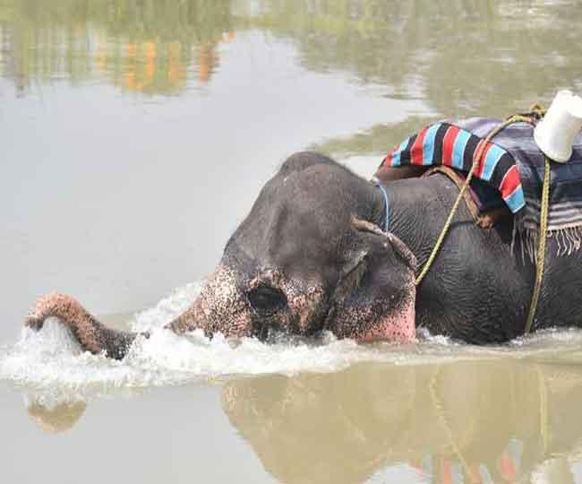 देखें तस्वीरें: जिद पर अड़ी हथिनी साथी के बुलाने पर ही आई पानी से बाहर