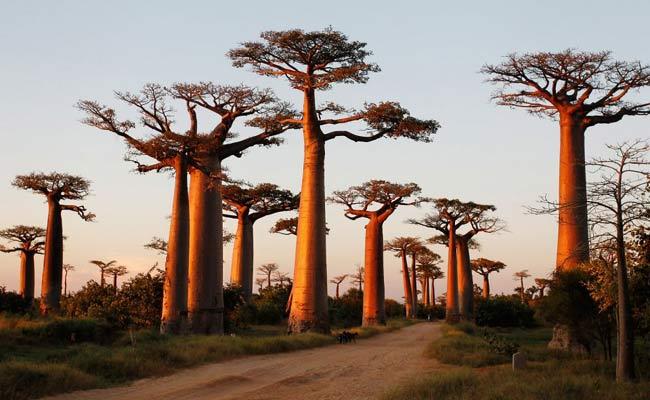 धरती पर 10 खूबसूरत जंगल, मौका लगे तो एक बार जरूर जाएं घूमने...