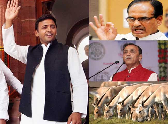 यूपी के चुनावी घमासान में गुजरात का गधा हुआ मशहूर, देखें तस्वीरें