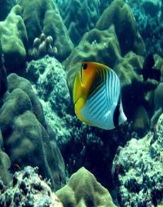 बहुत खूबसूरत और रंगीन है समुद्र के अंदर की दुनिया