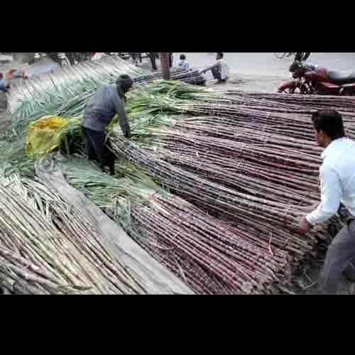 Chhath fest Effect on Market