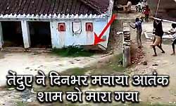 यूपी: गोरखपुर के गांव में तेंदुए ने मचाया दिन भर आतंक, तमाम लोग घायल