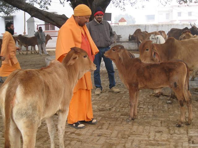 Mahanth Yogi Adityanath Cow love Gau Mata Prem FB Facebook Covers for free download