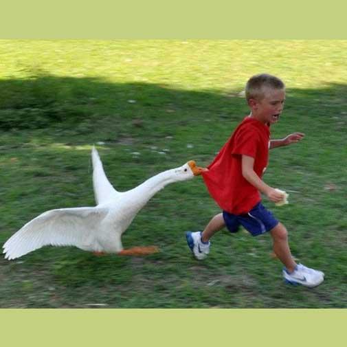 जानवरों से ज्यादा दोस्ती पड़ सकती है भारी! पास जाने से पहले इनकी हालत देख लें