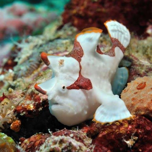 Unique undersea creatures: क्रिसमस ट्री और सूरज जैसे समुद्री जीव