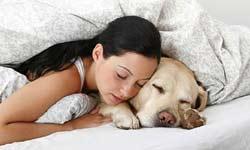 पता चल गया सोते समय कुत्ते किसके बारे में सोचते हैं