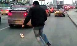 बिल्ली के बच्चे को बचाने के लिए चलते ट्रैफिक के बीच कूदा ये आदमी और दिखाया दिल छू लेने वाला नजारा