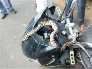 सांप देख बाइक छोड़कर भागा चालक