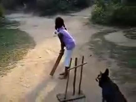 dog cricket 2017531 121253 31 05 2017