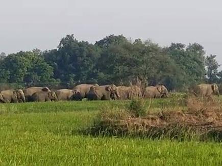 elephant 21 04 2017