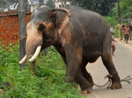 elephant attack korba 2017128 103314 08 12 2017