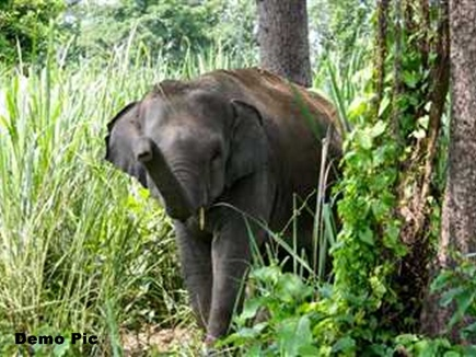 elephant terror jashpur cg 2017321 14350 21 03 2017