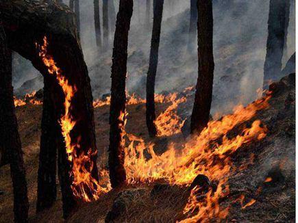 वैष्णो देवी के समीप जंगलों में भीषण आग