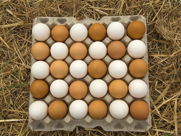 Video: यह है अंडों से चूजे निकालने वाली मशीन