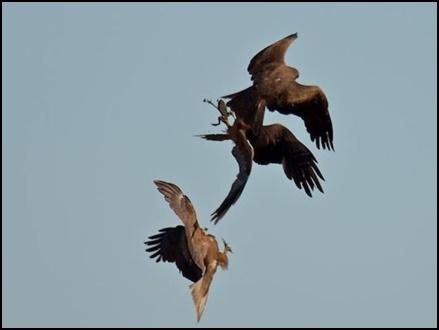 hunting birds 2017124 13310 04 12 2017