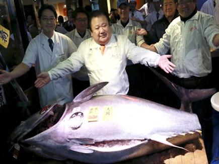 japan tuna fish 201717 15105 07 01 2017