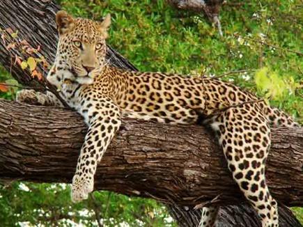 leopard-02 07 12 2017