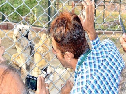 lion cub vet img.jpeg 14 11 2017