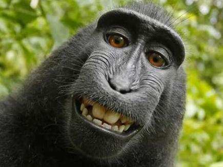 monkey-selfie  06 12 2017