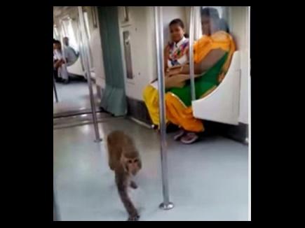 monkey metro 1 13 09 2017