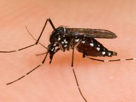 mosquito 2017520 104651 19 05 2017