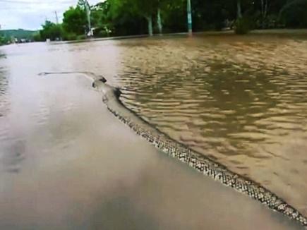 python dead 03 04 2017