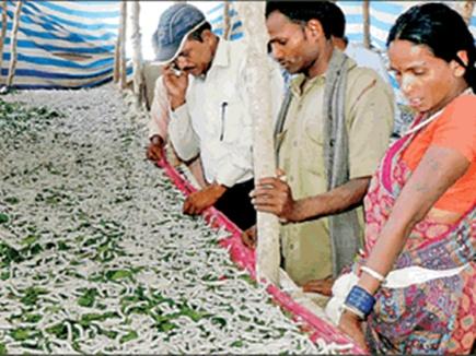 silk farming balaghat 2017321 152042 19 03 2017