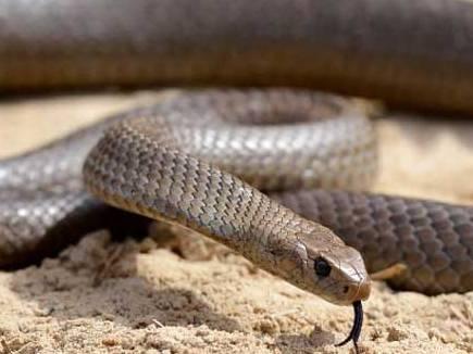 snake bite2 20 09 2015