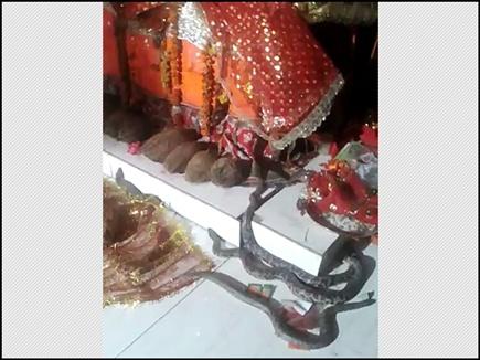 जब  मंदिर में पहुंचे 4 सांप देवी माँ  के चरणों से  लिपट गए !