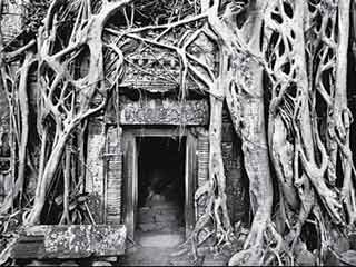 ta-prohm-temple 2014831 15339 31 08 2014