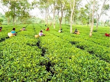 tea garden cg people 2017325 102628 25 03 2017