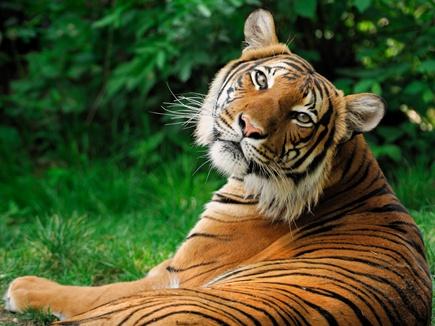 tiger 2017315 233343 15 03 2017