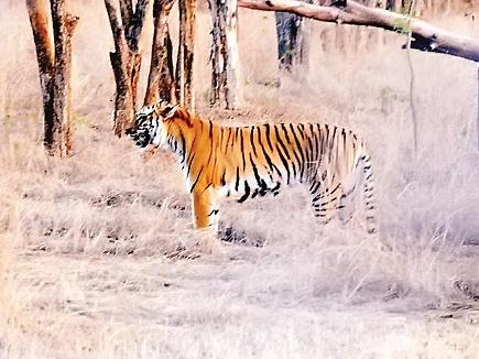 tiger shivaji cm cg 2017322 101146 22 03 2017