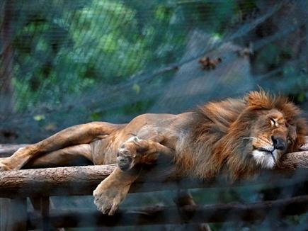 चिड़ियाघर में भूख से मर गए 50 जानवर