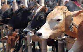 Supreme Court suspends ban on cattle trade for slaughter