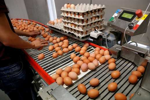 European egg scandal that is spreading to Asia now